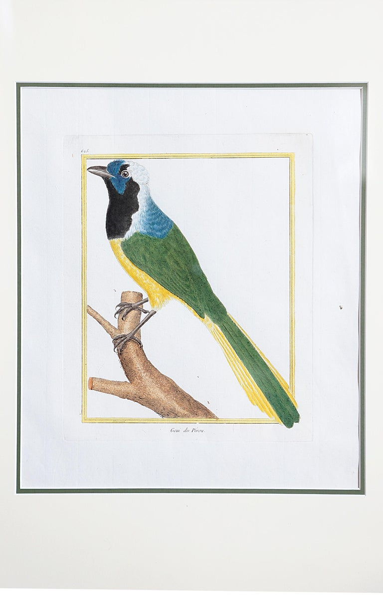Hand-Colored Bird Engravings by François Nicolas Martinet For Sale 1