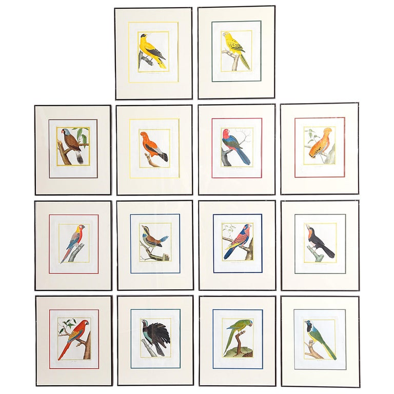 Hand-Colored Bird Engravings by François Nicolas Martinet For Sale