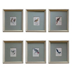 Hand Colored Bird Engravings, circa 1890 (6 individual pieces available)