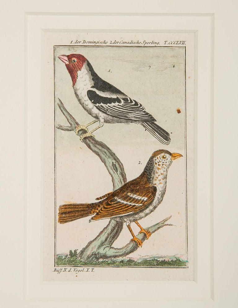 Hand-Colored Bird Engravings French 18th Century by Francois-Nicolas Martinet For Sale 5