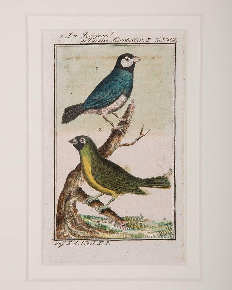 Hand-Colored Bird Engravings French 18th Century by Francois-Nicolas Martinet For Sale 6