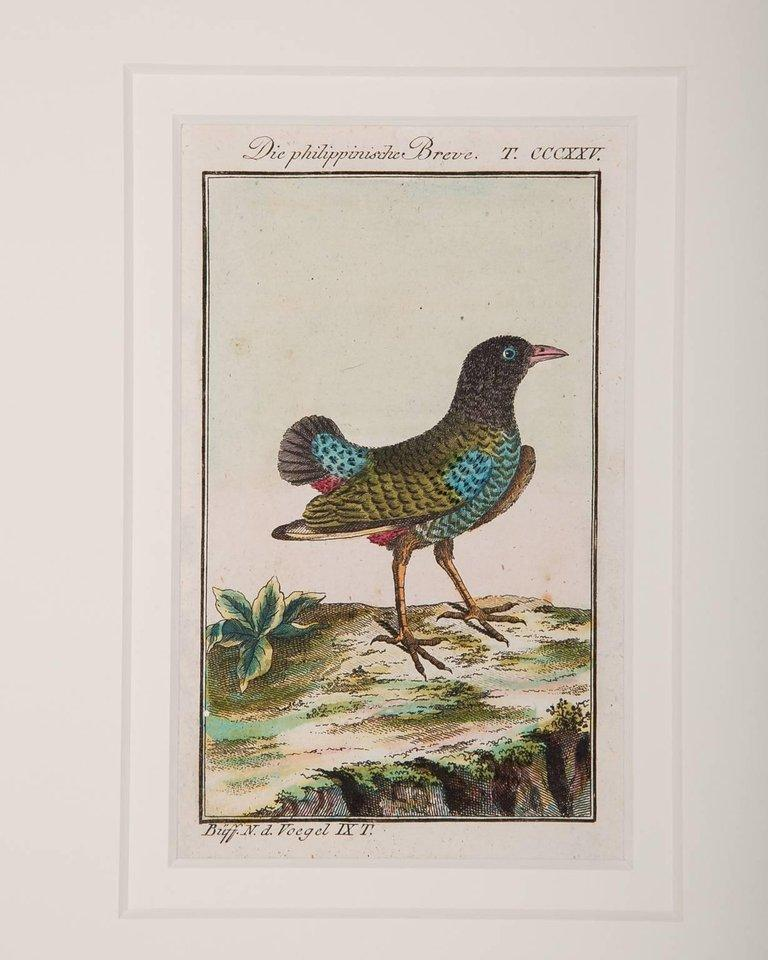 Hand-Colored Bird Engravings French 18th Century by Francois-Nicolas Martinet For Sale 7