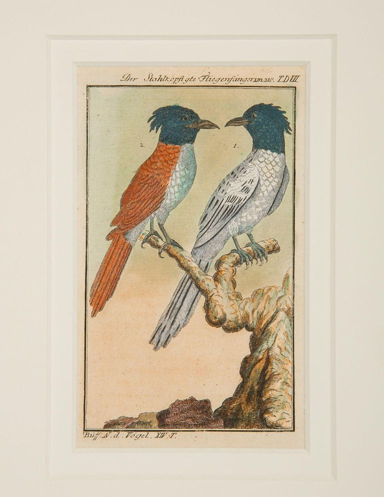 We are pleased to offer these Individual bird scenes captured on paper in the style of the Audubon bird engravings. These small, gem like, hand-colored engravings represent the rare and compelling ornithological drawings of the influential