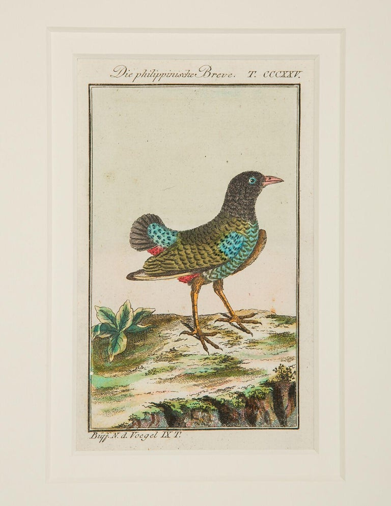 Regency Hand-Colored Bird Engravings French 18th Century by Francois-Nicolas Martinet For Sale