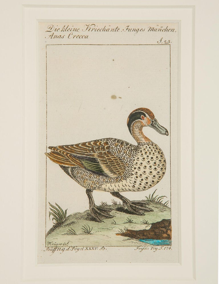 Hand-Colored Bird Engravings French 18th Century by Francois-Nicolas Martinet In Excellent Condition For Sale In Katonah, NY