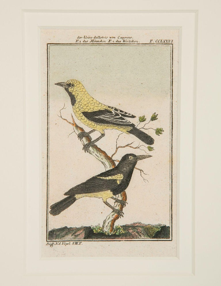 Paper Hand-Colored Bird Engravings French 18th Century by Francois-Nicolas Martinet For Sale