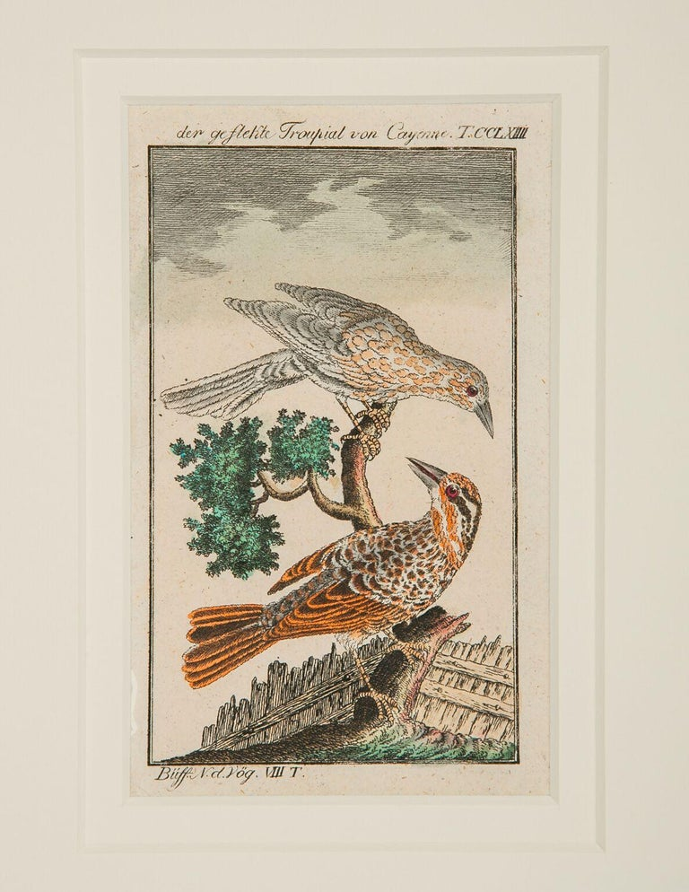 Hand-Colored Bird Engravings French 18th Century by Francois-Nicolas Martinet For Sale 1