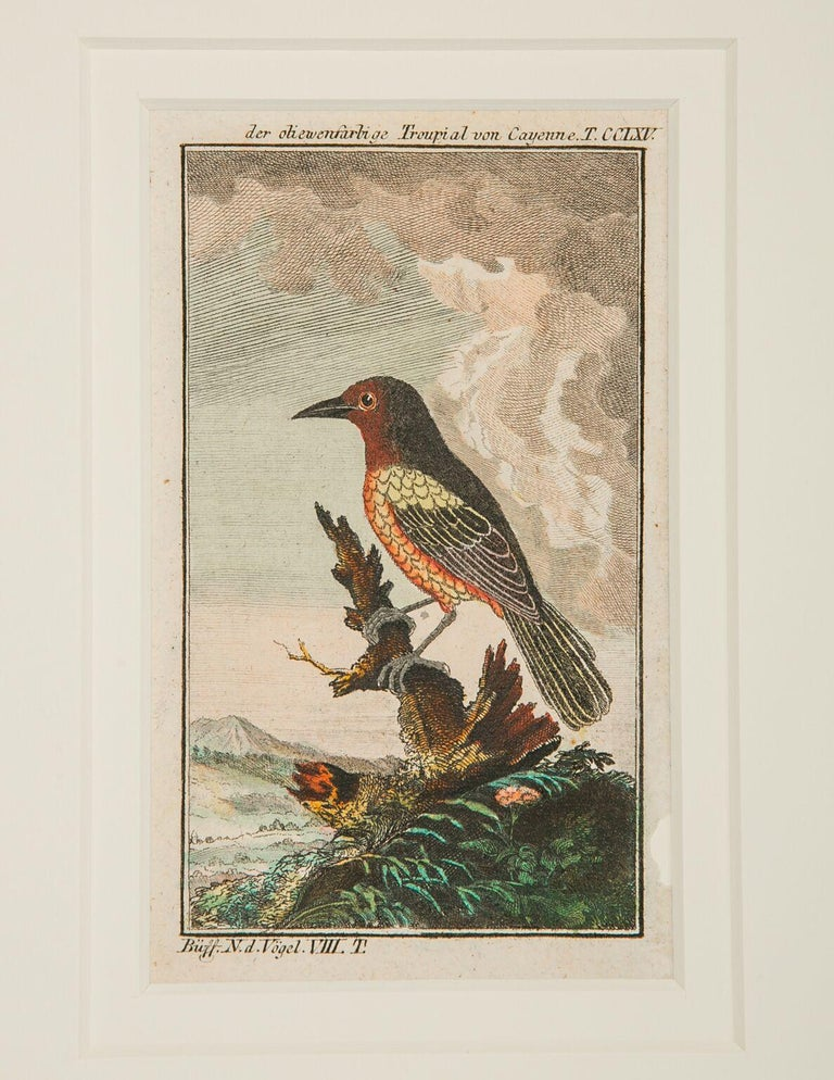 Hand-Colored Bird Engravings French 18th Century by Francois-Nicolas Martinet For Sale 2