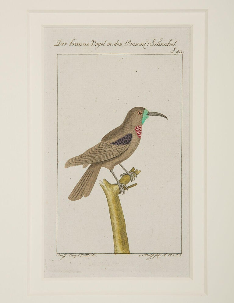 Hand-Colored Bird Engravings French 18th Century by Francois-Nicolas Martinet For Sale 3