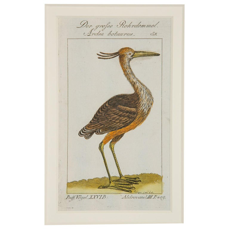 Hand-Colored Bird Engravings French 18th Century by Francois-Nicolas Martinet For Sale