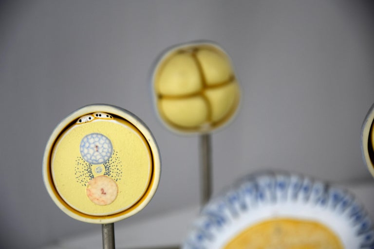 Handmade Mid-Century Modern Anatomical Cell Division Models For Sale 4