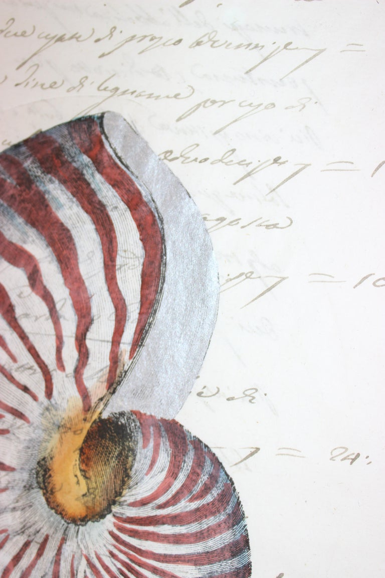 This hand painted nautilus shell on a piece of parchment paper (that dates to the early 19th century) will make a definite stylish statement.