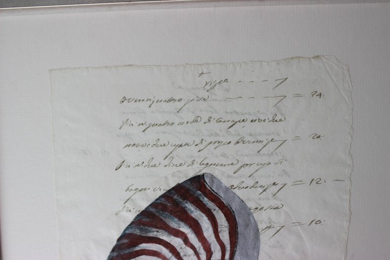 Neoclassical Revival Hand Painted Nautilus Shell on Parchment For Sale