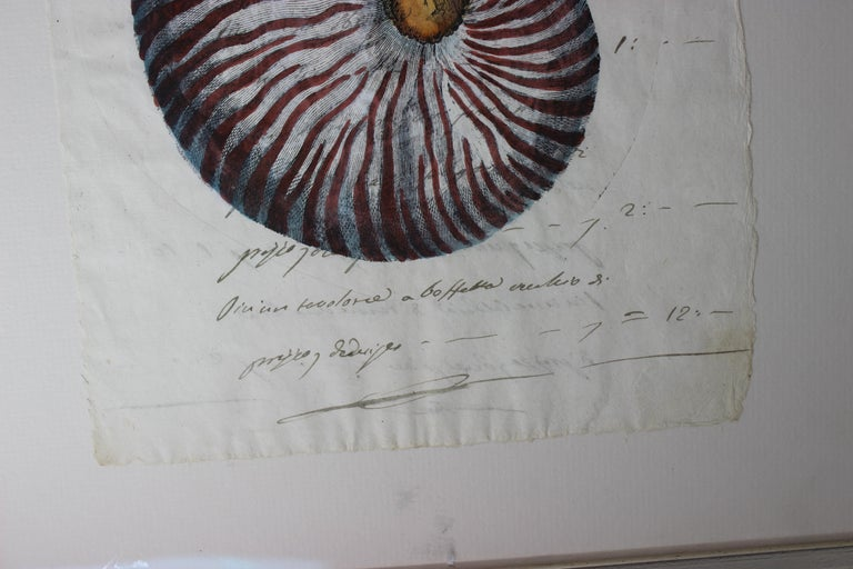 Italian Hand Painted Nautilus Shell on Parchment For Sale