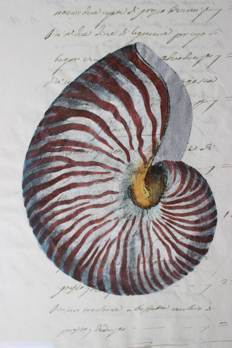Hand-Crafted Hand Painted Nautilus Shell on Parchment For Sale