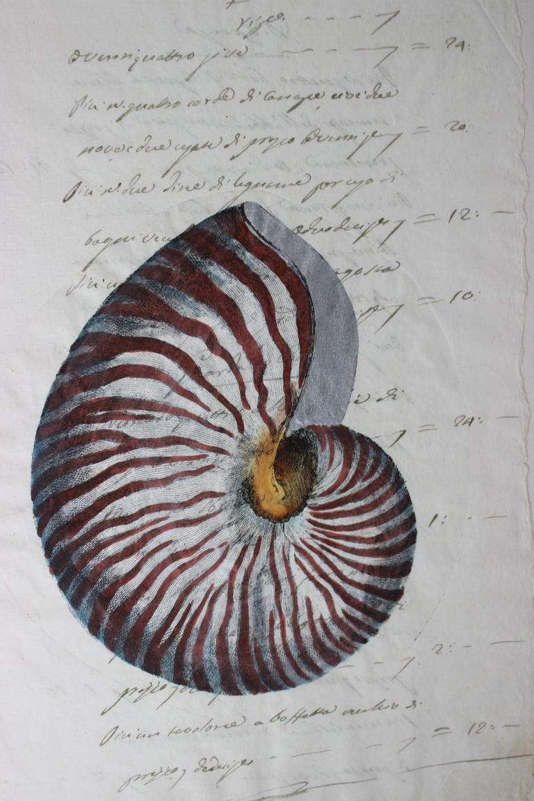 Hand Painted Nautilus Shell on Parchment In Good Condition For Sale In West Palm Beach, FL