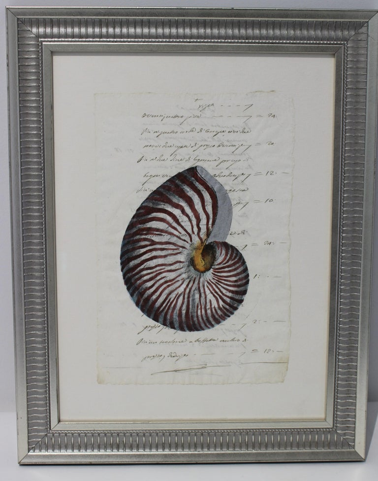 Paper Hand Painted Nautilus Shell on Parchment For Sale
