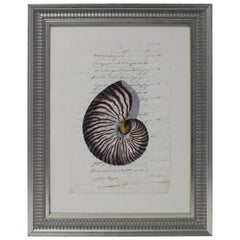 Hand Painted Nautilus Shell on Parchment
