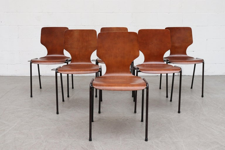 Fritz Hansen butterfly style teak toned wingback stacking chairs. Beautifully curved shell seat with tubular enameled metal frame. Chairs can interlock to create a stationary row. In original condition with visible signs of wear including some