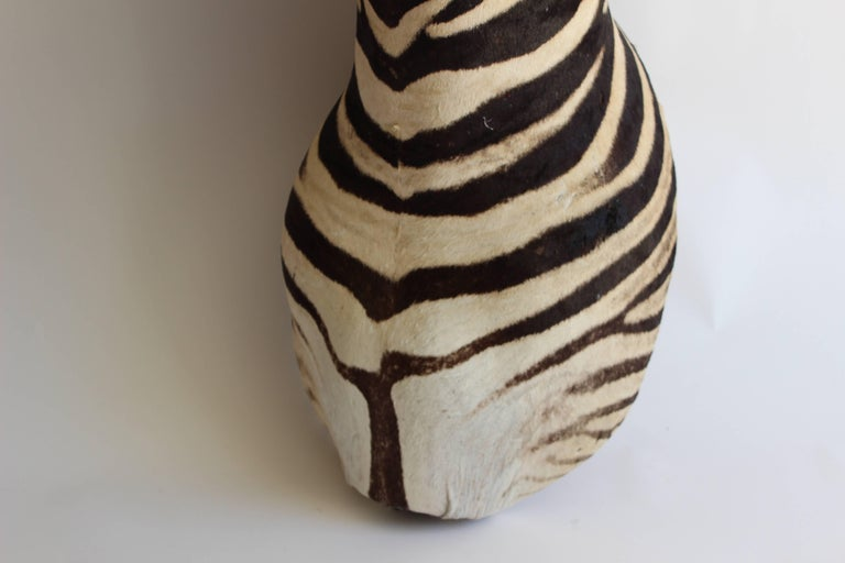 Handsome Taxidermy Zebra Mount For Sale 6