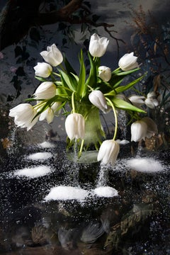 White Snow (Floral Photography)