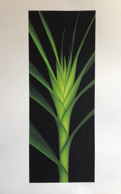 Large Botanical Print Abstract Floral Color Photograph Green Leaf Pencil Signed