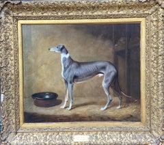 Elegant portrait of a Greyhound