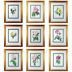 Henry Curtis Set of Nine Botanical Engravings, the Beauty of the Rose