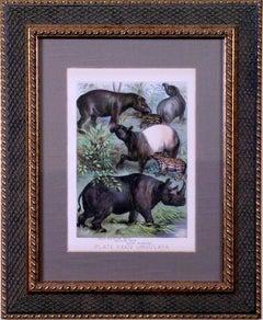 Plate XXXIV.  Ungulata.  South American Tapir, Malayan Tapir, Black Rhinoceros