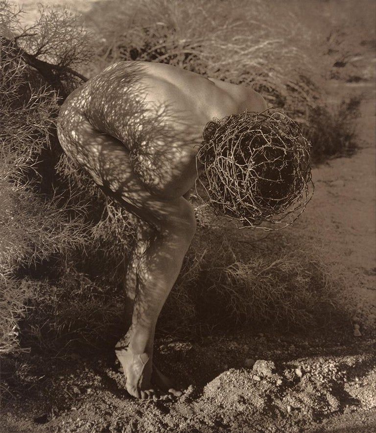 Herb Ritts Figurative Photograph - Male Nude with Thorns, Joshua Tree
