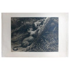 Antique Black and White Etching with Leopards Playing