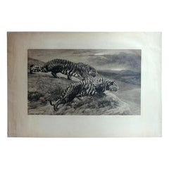 Black and White Etching with Tigers, the Destroyers