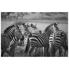 """""""Herd,"""" Black and White Photograph by Carolyn Schroeder"""