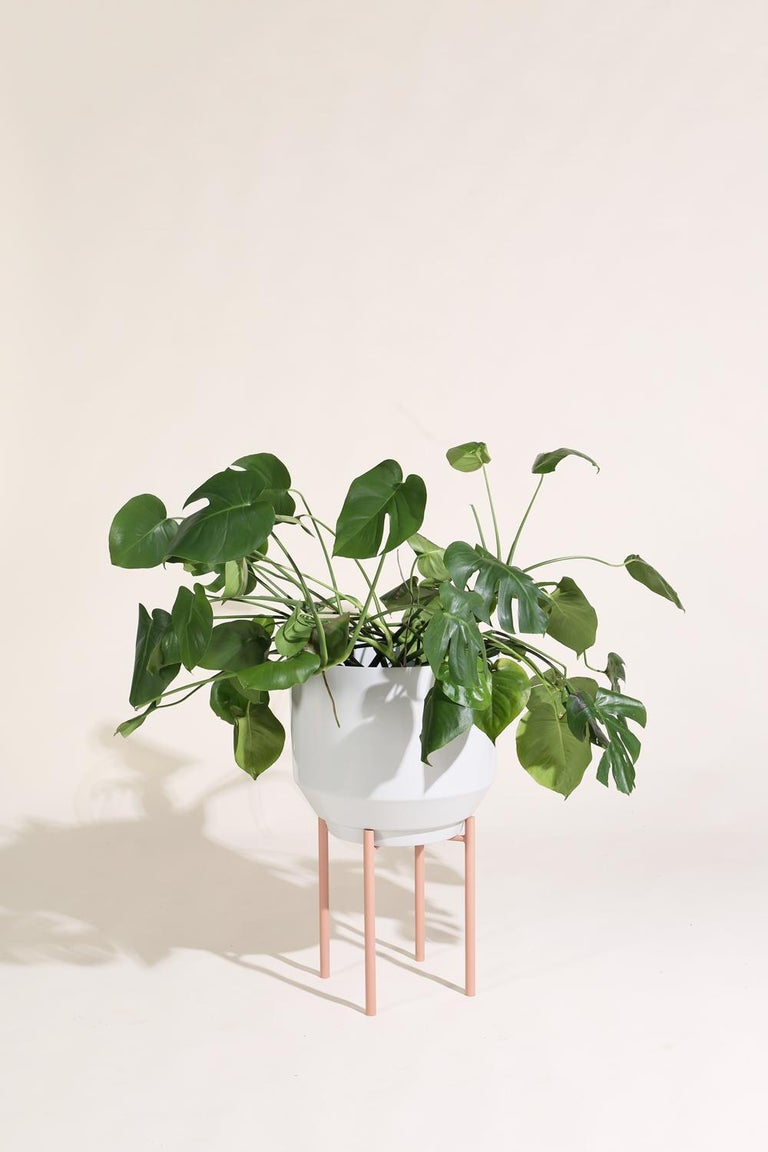 Modern Planter Stand, Peach For Sale