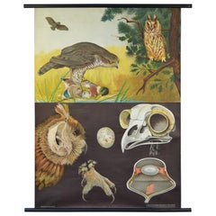 1950s Canvas Wall - School Chart  Raptorial Birds by Jung - Koch - Quentell