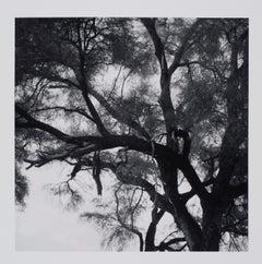 Hideoki, Black & White Photography, Cheetah, Tanzania, 1994