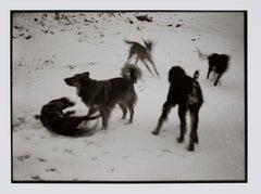 Hideoki, Black & White Photography, Dogs Playing on Snow, Montauk, 1970