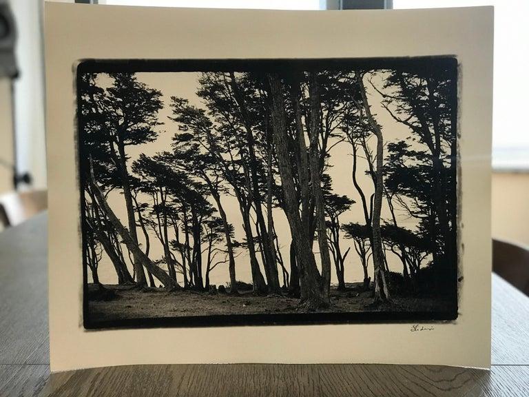 Hideoki, Black & White Photography, Trees, Chile, 2008, 16