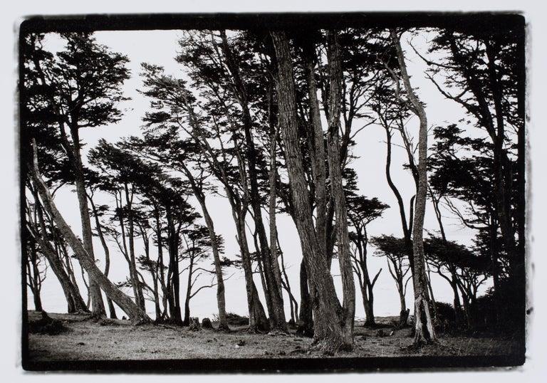 "Hideoki Hagiwara Black and White Photograph - Hideoki, Black & White Photography, Trees, Chile, 2008, 16"" x 20"""
