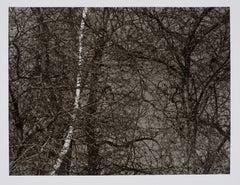 Hideoki, Black & White Photography, Untitled, Backyard, 1988