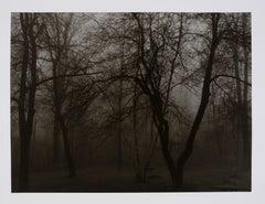 """Hideoki, Black & White, Trees in the Shadows, USA, 1988, 16"""" x 20"""""""