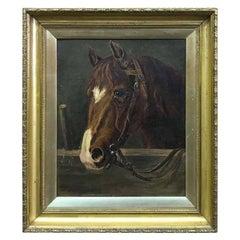 'Horse Portrait' by Clive MacDonnell-Dixon '1902'