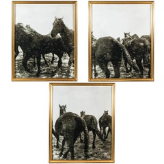 Horses in the Snow Triptych, 1999 by Richard Phibbs