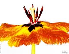 Gudoshnik Tulip
