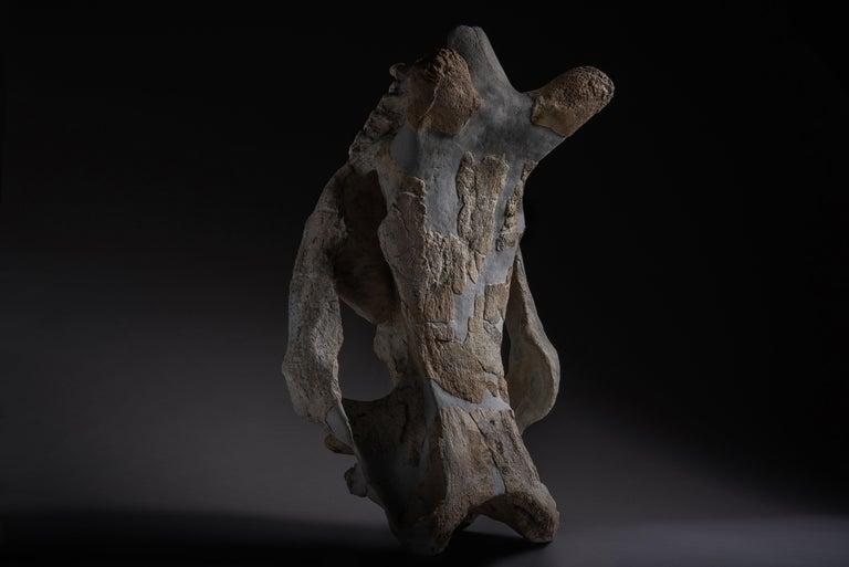 Huge Megacerops 'large-horned face' Fossil Skull For Sale 1