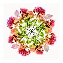 Polychromatic Fiori Rose III - contemporary floral multi-colour xogram print