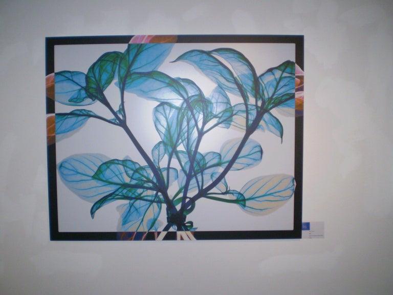 Tied Basil - contemporary blue leaves inkjet xogram x-ray photo chromaluxe print - Print by Hugh Turvey
