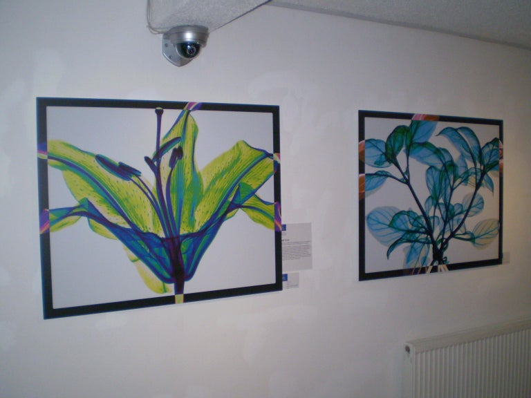 Tied Basil - contemporary blue leaves inkjet xogram x-ray photo chromaluxe print - Contemporary Print by Hugh Turvey