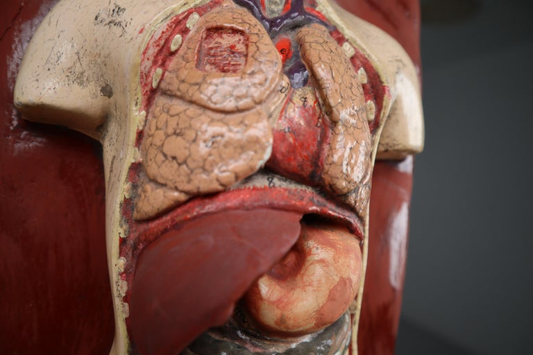 Human Medical Anatomical Torso Model Wood and Metal Base Czech Republic, 1920s In Good Condition For Sale In Almelo, NL