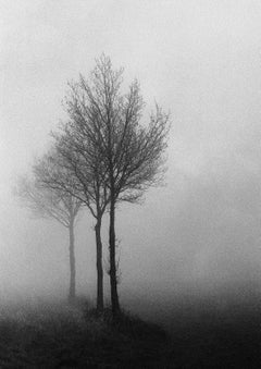 3 Trees -Signed limited edition fine art print,Black white photo, Analog,France